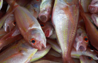 Foodservice sector facing inflation in fish, oils and fats, study reveals
